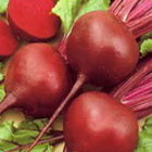 Beetroot Extract